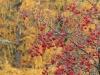 rot-vor-gelb