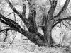 Baum in den Donauauen