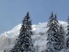winterwald3
