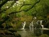 Irland-Wald
