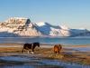 Island - toni jaitner