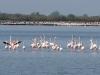 lagune-von-cavallino-treporti-3