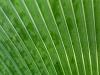 Grüne Linien - Alex P.