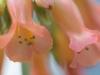 Blütendetail - Enie P.