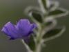 Zarte Blüte - Enie P.