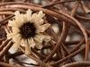Trockenblume - Enie P.