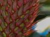 Ananas - Enie P.