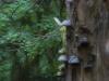 Wunderwald
