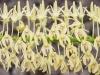 Orchideenwelt 4 -  toni jaitner