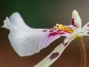 Orchideenwelt - Alex P.