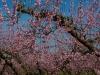 Blütenwirrwarr - Enie P.