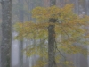 die Farben des Herbstes, Annamaria Pernstich