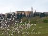 Blüten vor Pienza, Helmuth Pliger