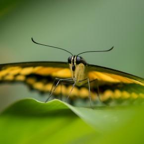 Haus der Schmetterlinge