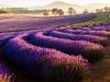 Die Provence Australiens - Nicole E.