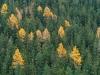 Herbstwald - Alex P.