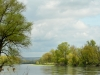 Donauauen_Edeltraud
