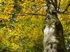 Farben im Wald