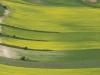 gelb - grün in Casteluccio