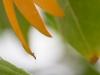 Ameise auf Absprung - Enie P.