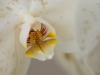 Orchideenwelt 5 -  toni jaitner