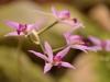 Orchideenwelt