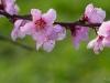 Blütenzauber - Enie P.