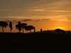 Sonnenuntergang in der Toskana - Enie P.