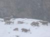 im-schneegestoeber