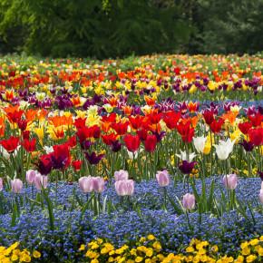 Besuch der Blumeninsel Mainau