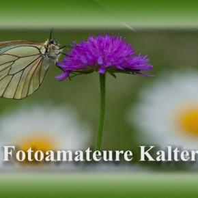 Vereine vereinen - Fotoamateure Kaltern