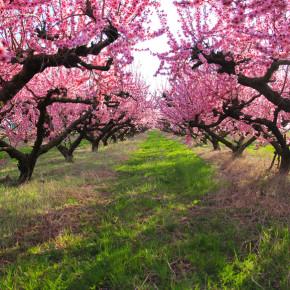 Traumtag im Pfirsichland