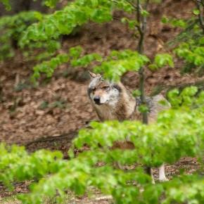 Frühling im bayrischen Wald