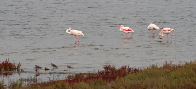 Wo Aal und Flamingo sich gute Nacht sagen